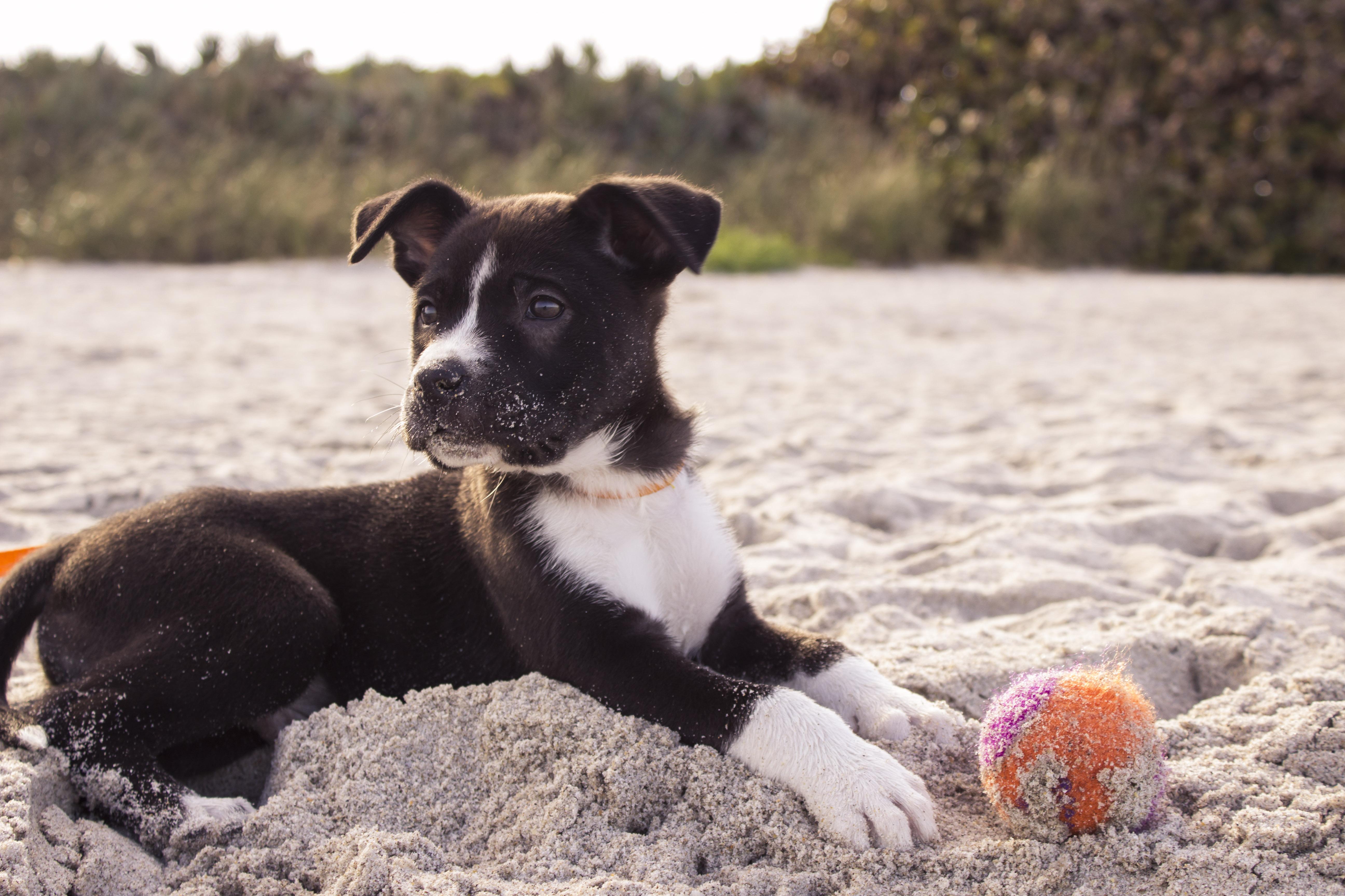 Die schönsten Hundestrände an der Nordsee