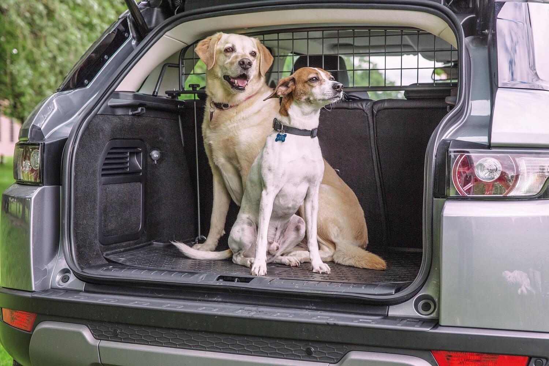 zwei Hunde im Auto mit Travall Guard