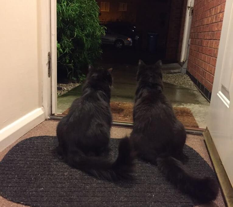 Bei Anne daheim leben gleich zwei Kater. Anne hat die Geschwister Leo und Ric im Alter von vier Monaten adoptiert und so aus dem Tierheim geholt.