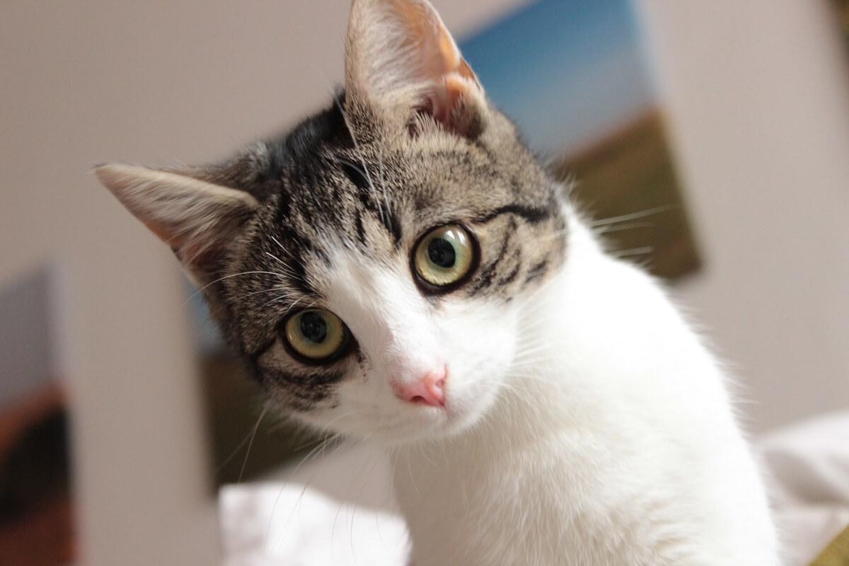 Minka, die Katze unserer Kollegin Sarah, ist fünf Jahre alt und hat immer noch die beneidenswerte Energie und Neugierde eines Kittens. Wenn sie nicht gerade Schmetterlinge im Garten fängt, läuft sie über die Dächer der Nachbarschaft oder jagt einen Korken durch die Küche. Minka kann aber auch ganz verschmust sein und wäre furchtbar beleidigt, wenn sie nicht in Sarahs Bett schlafen dürfte.