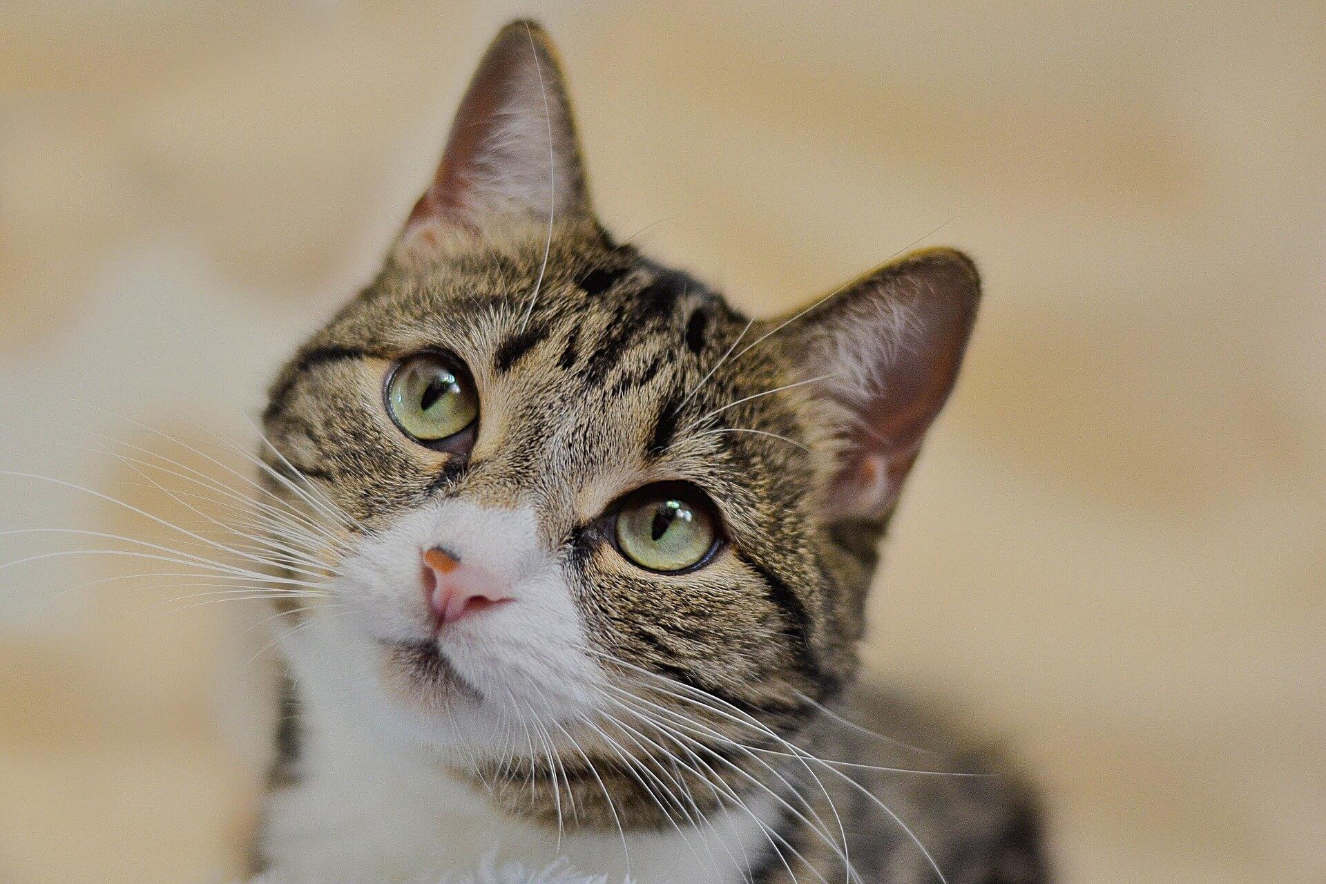 Katze ist neugierig