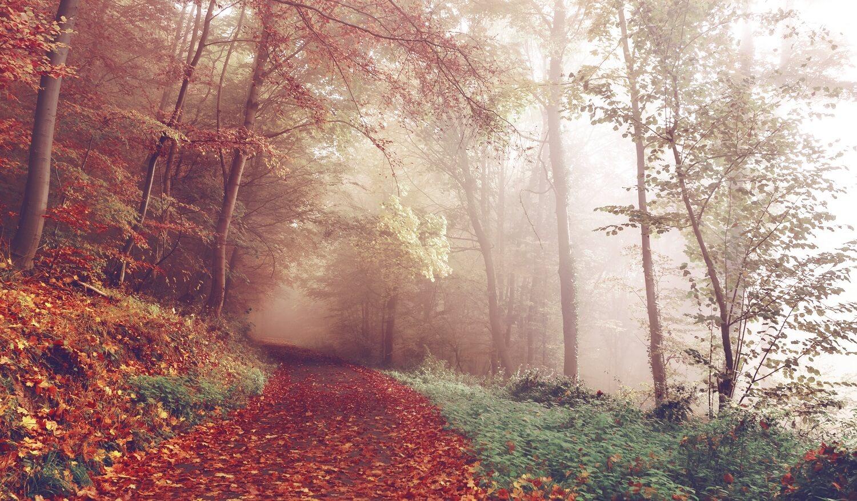 Es gibt ein Rezept gegen den Herbstblues: Wanderstiefel schnüren und raus in die Natur! Wir haben eine Hitliste der schönsten Wanderregionen für den Herbst zusammengestellt. Die Touren sind zwischen neun und zwölf Kilometern lang und daher auch für Familien mit Kindern ab neun Jahren sowie Hundebesitzer geeignet.
