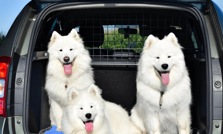 Mit Travall könnt ihr Hunde ganz einfach ans Autofahren gewöhnen.