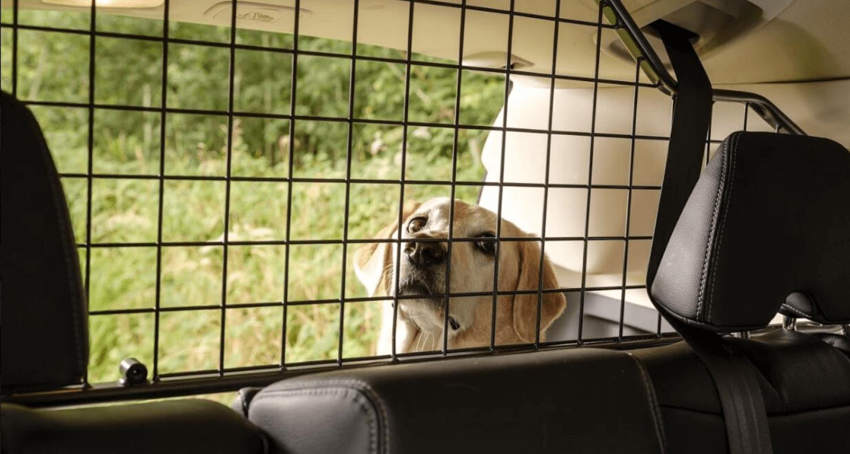 Im Experteninterview zeigt uns eine Hundetrainerin, wie man den Hund ans Autofahren gewöhnt.