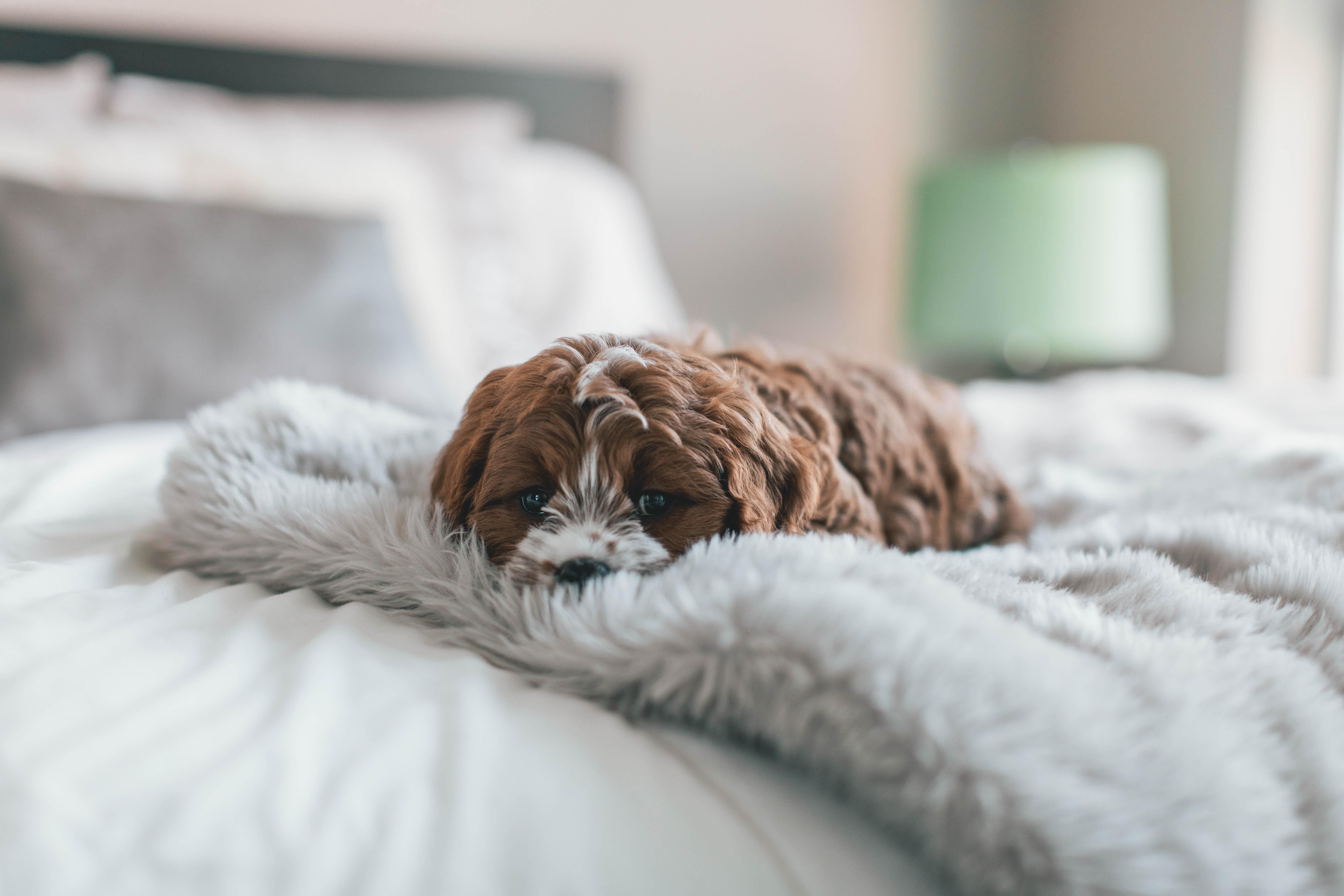 Wenn der Hunde nicht in den Urlaub mitkommen kann, gibt es verschiedene Möglichkeiten der Hundebetreuung. Dabei bleibt der Hund entweder im eigenen Haus oder er zieht vorübergehend in eine Hundepension oder zu Freunden bzw. Verwandten. © Unsplash.com