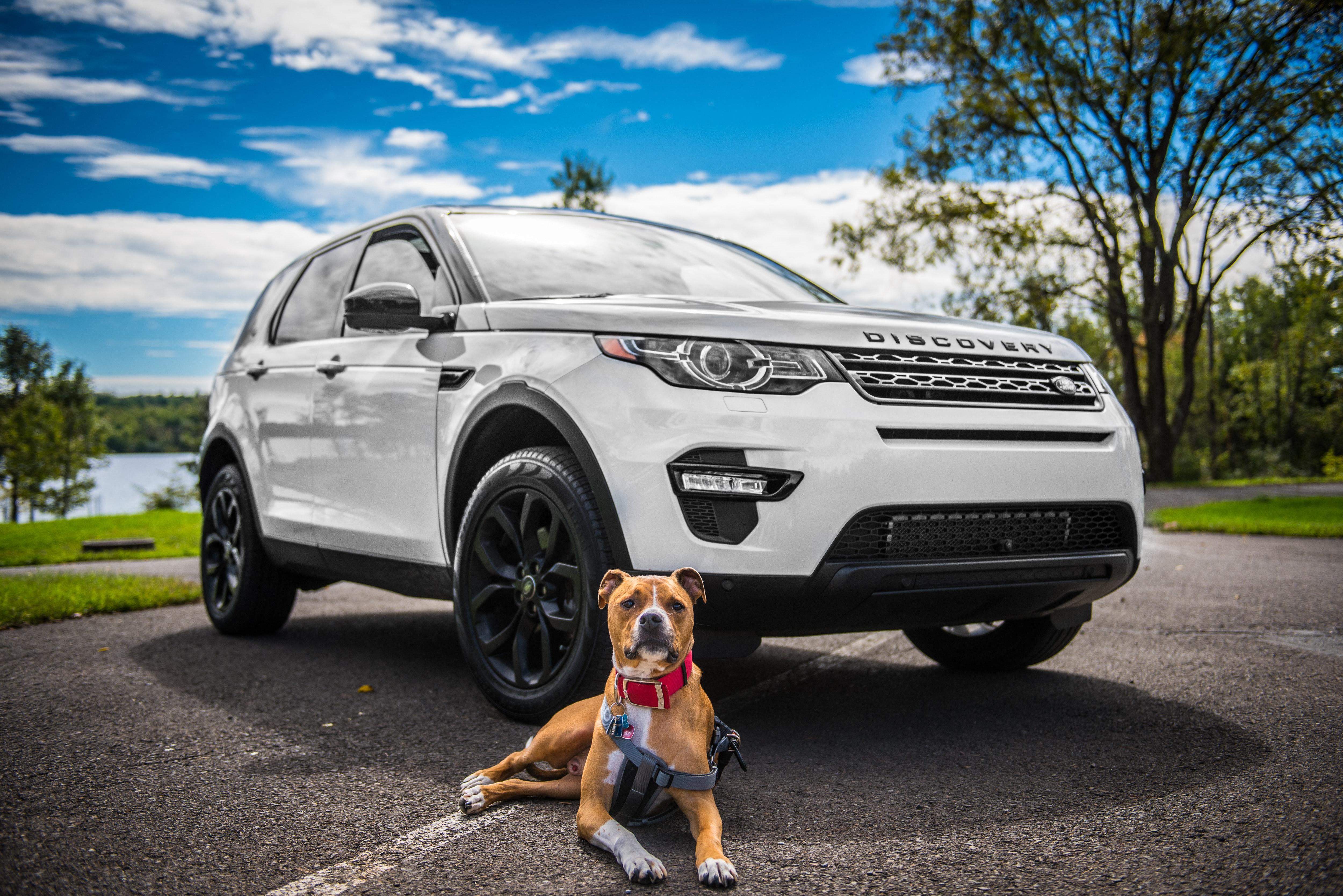 Der Land Rover Discovery Sport ist ein luxuriöser SUV, der sich als eins der besten Autos für Hundebesitzer herausgestellt hat. Der Kofferraum ist groß und wird mithilfe von Autozubehör von Travall zur idealen Transportmöglichkeit für Hunde im Auto. © Pixabay.com