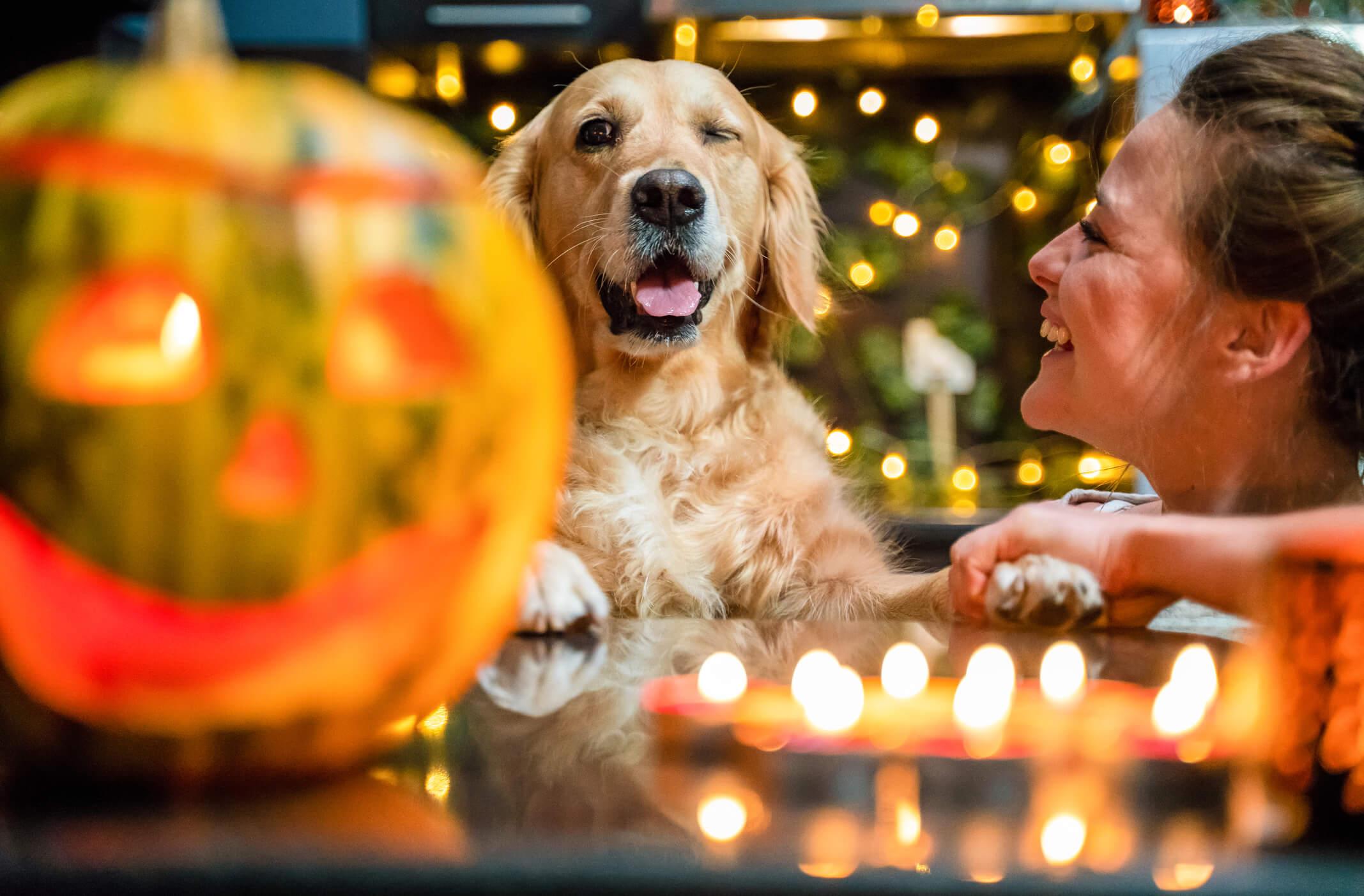 Gruselmasken, Klingeln an der Haustür, Parties und ungewohnte Dekorationen mit Kürbis - Hunde können am 31. Oktober Angst bekommen. Wir haben eine Liste an Tipps zusammengestellt, damit Hunde an Halloween weniger Stress haben. © Pexels.com