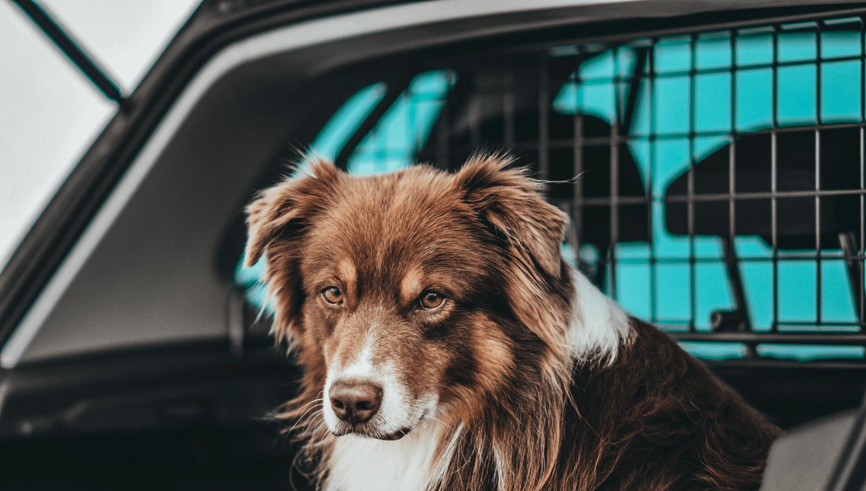 Mittlerweile umfasst das Sortiment von Travall fahrzeugspezifische Hundegitter für rund 1.200 Modelle. Auch Fahrer von Kleinwagen wie zum Beispiel dem Audi A1, Ford Fiesta oder Citroën C3 können bei Travall ein Gitter erwerben, das speziell für ihr Fahrzeug designt wurde. So können Hundehalter ihre Hunde auch in kleinen Autos sicher transportieren. © Travall