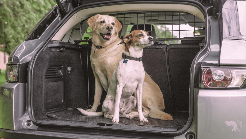 In diesem Beitrag sehen wir uns die Rechtslage beim Transport eines Hundes genau an. Darüber hinaus wollen wir auf einen weiteren wichtigen Aspekt eingehen: die Autoversicherung. © Travall