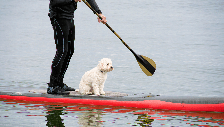 Stand Up Paddle mit Hund im Winter ist möglich, wenn man auf ein paar Dinge achtet. Wir zeigen euch, worauf es beim Thema Stehpaddeln mit Hund im kalten Wasser ankommt. © iStock.com