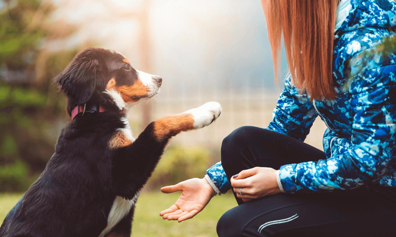 Hundetraining kann Geduld kosten, wenn etwas einfach nicht klappen will. Damit das Training leichter fällt und mehr Spaß macht, verraten wir euch unsere Tipps und Tricks. © iStock.com