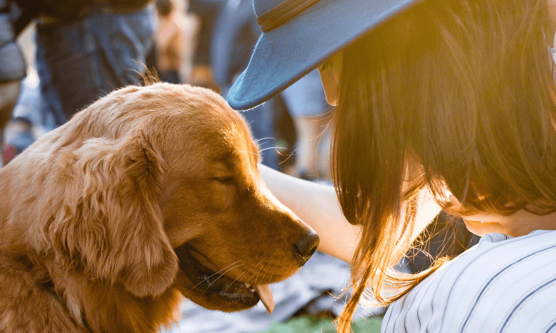 Am Valentinstag können wir unseren Hunde eine Extraportion Liebe und Aufmerksamkeit schenken, denn auch Hunde sind unsere besten Freunde. © Unsplash.com