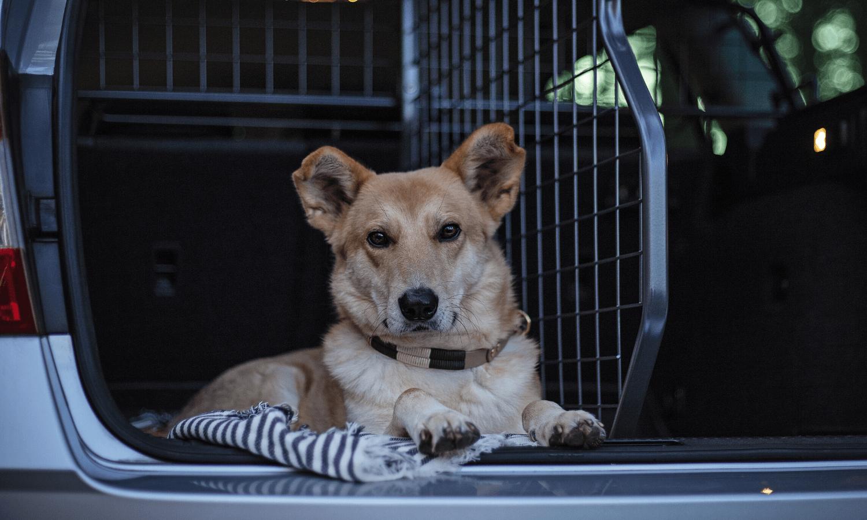 Das Hundeauto muss so ausgestattet sein, dass der Hund darin bequem Platz findet und während der Fahrt ordnungsgemäß gesichert ist. © Travall