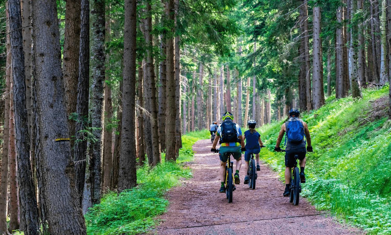 Mountainbike fahren wird in Deutschland immer beliebter. Wir stellen die besten Strecken vor. © Pixabay.com