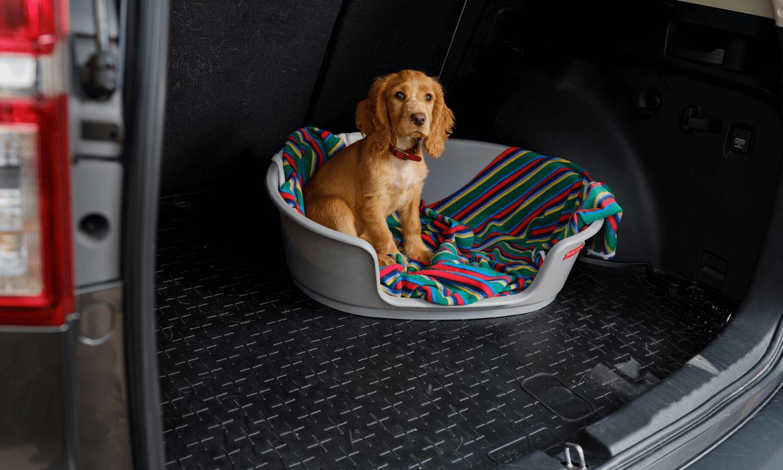 Wer einen Hund im Kofferraum hat, der kennt das Problem: Der Boden im Heck ist übersät mit schmutzigen Pfotenabdrücken und Hundehaaren. Hier empfiehlt sich der Einsatz einer Travall CargoMat Kofferraumwanne. © Travall