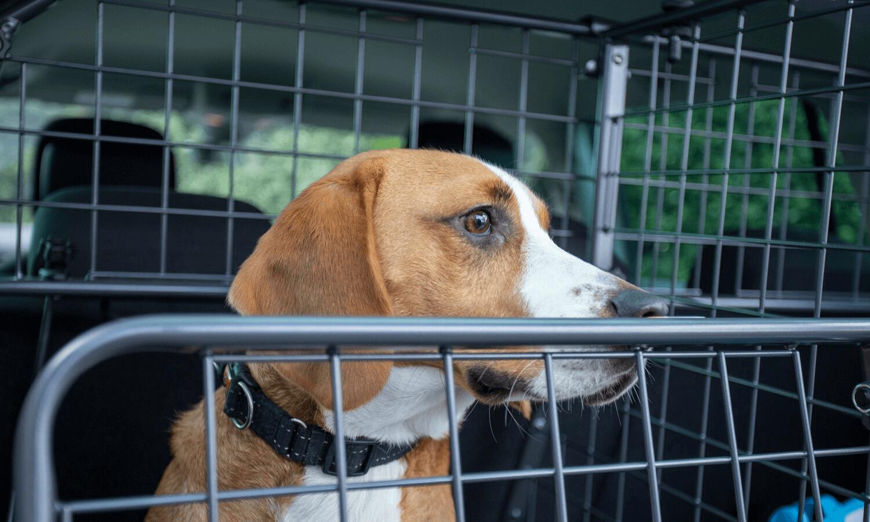 Travall hat nun auch Heckgitter in sein Sortiment aufgenommen. Die praktischen Gittertüren werden in Kombination mit dem Hundegitter und Laderaumteiler im Heck nachgerüstet und halten Hunde davon ab, voreilig aus dem Kofferraum zu springen. © Travall