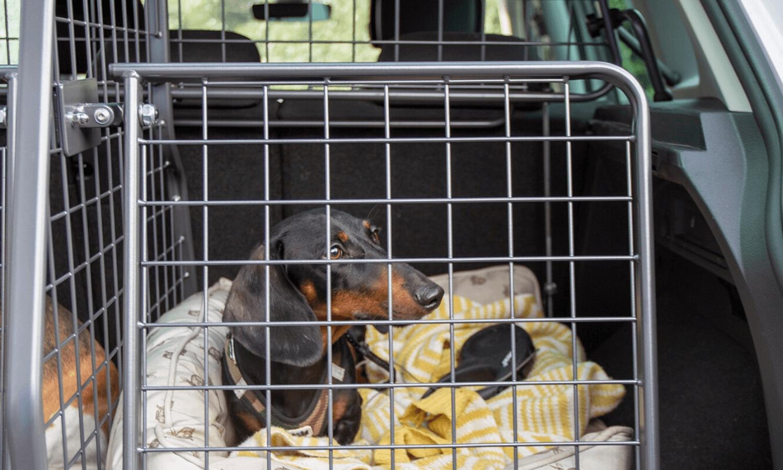 Wer seinen Hund im Auto sicher transportieren möchte, dem empfehlen wir ein Travall Gitter Set bestehend aus Hundegitter, Kofferraumteiler und Heckgitter. © Travall