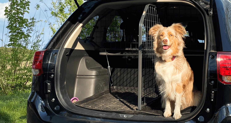 Auch im E-Auto müssen Hunde ordnungsgemäß gesichert werden. Travall fertigt Hundegitter, Kofferraumteiler und Heckgitter speziell für Elektrofahrzeuge. © Travall