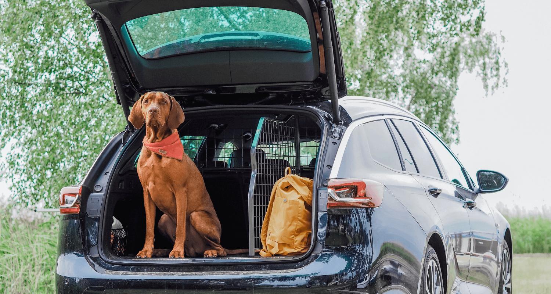 Die fahrzeugspezifischen Kofferraum-Trenngitter des Weltmarktführers Travall bieten ein erhöhtes Maß an Sicherheit im Fahrzeuginnenraum. Welche Besonderheiten die Hundegitter-Sets, auch Packs genannt, bieten, erklären wir in unserem Blogpost. © Travall