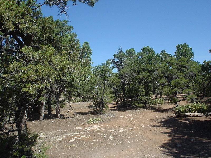 This is a similar look to where I got lost in a pinyon pine forest. This is actually a photo from the Grand Canyon.