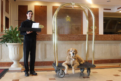Dog sitting on bell boy cart in hotel lobby