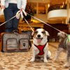 Manners matter: etiquette at pet-friendly hotels