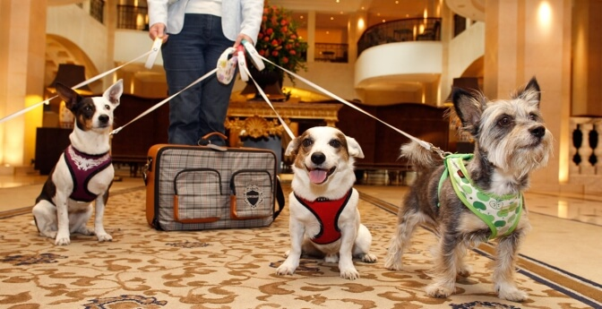 Three dogs on leash in hotel lobby