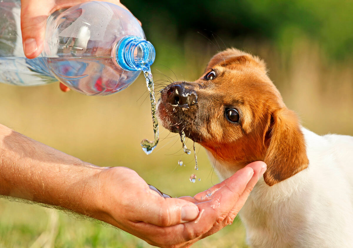 Man giving water to dog from bottle