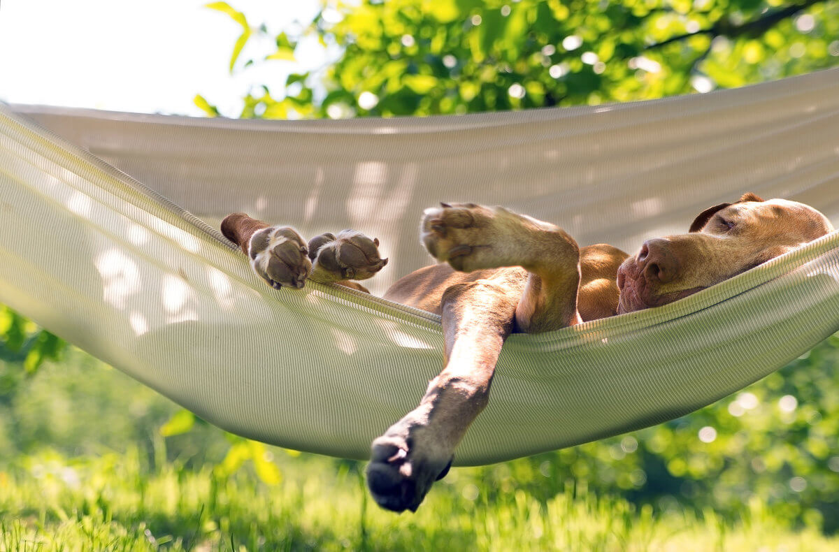 dog relaxing on hammock