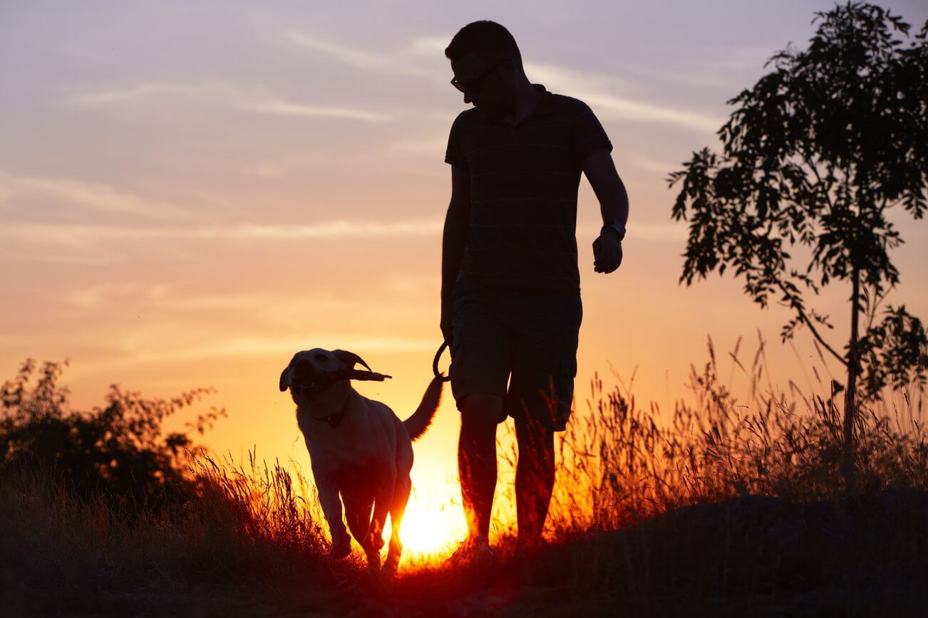 Silhouette of man and dog walking at dusk