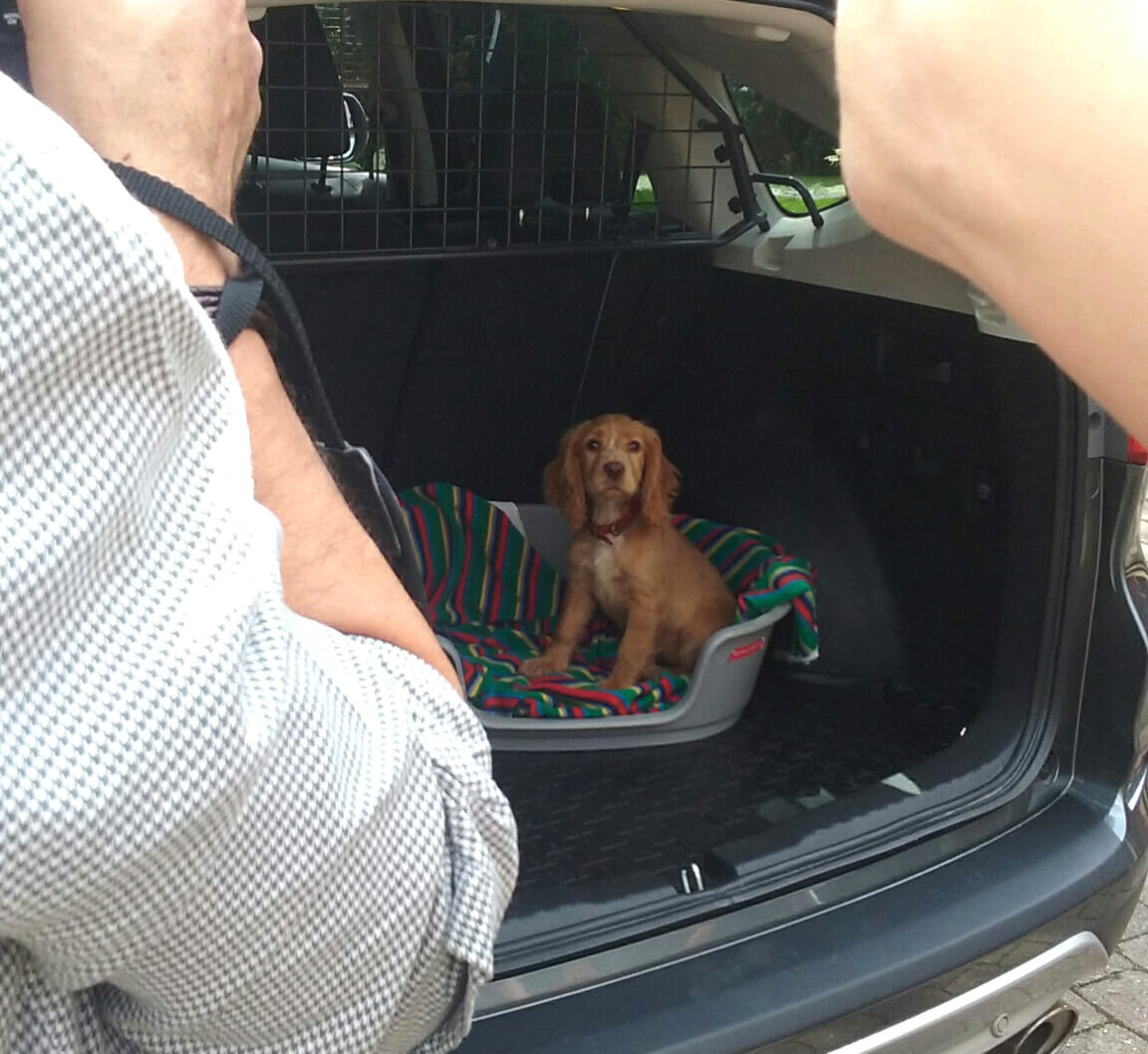 Photographer taking picture of puppy in trunk of SUV