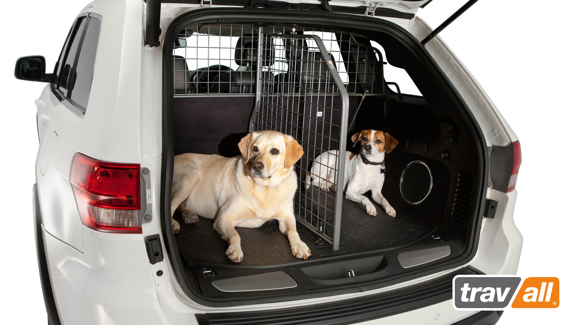 dogs in trunk