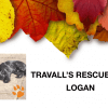 Travall's Rescues: Logan