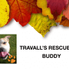 Travall's Rescues: Buddy