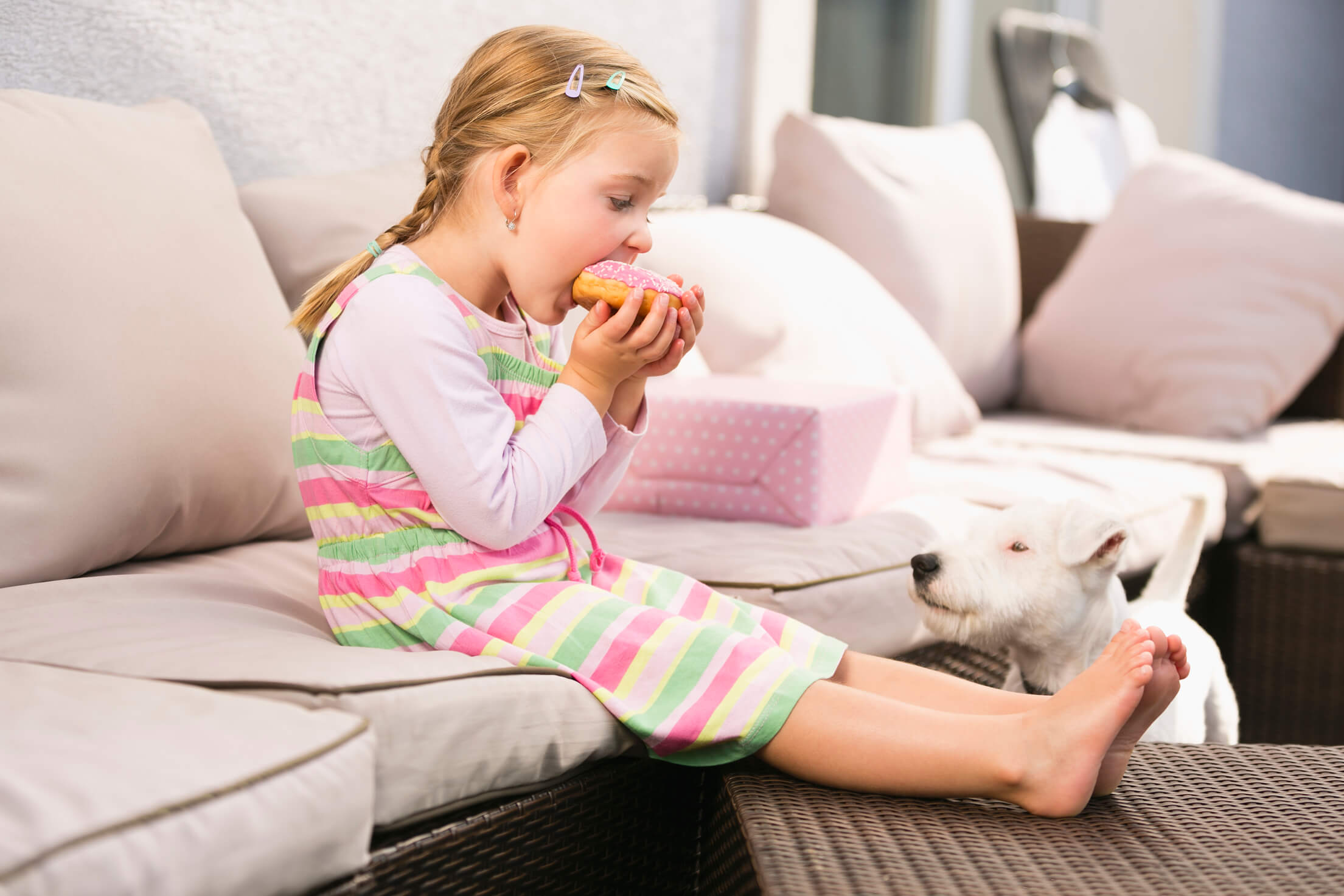 A small white dog sits at a young girls feet as she eats a donut on the couch.