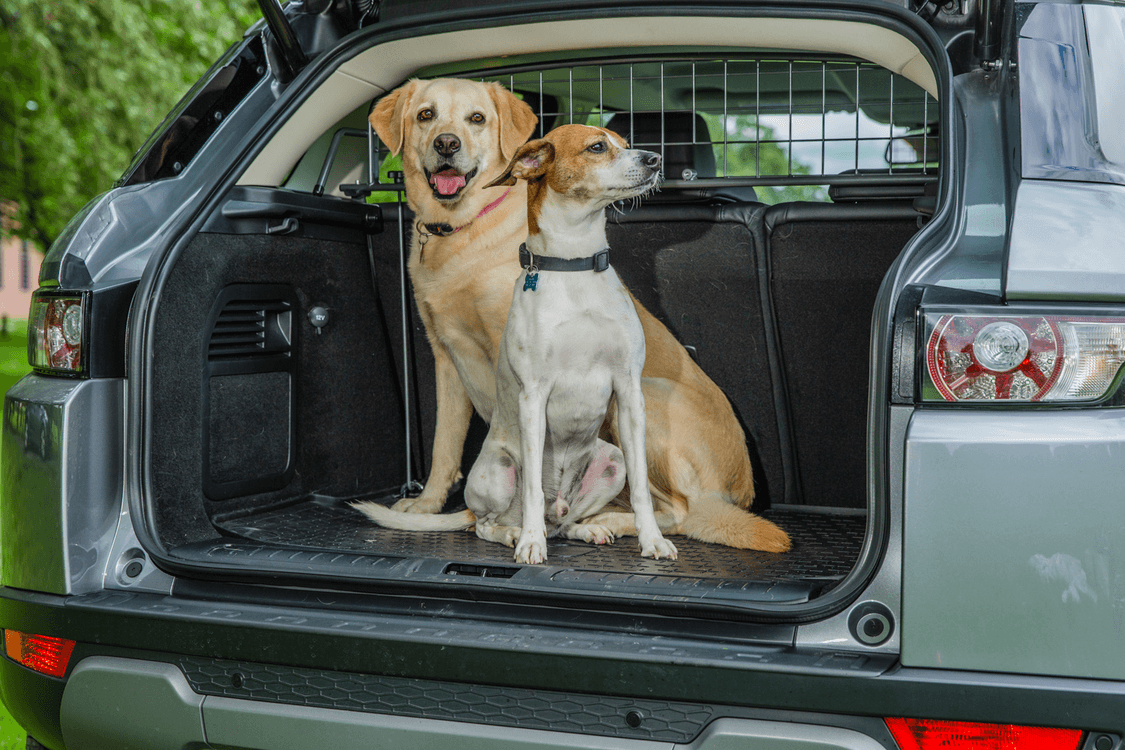 Travall pet barrier and two dogs in the trunk