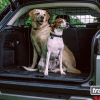 The Perfect Dog Car Barrier for your Travel Buddy