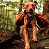 Adventure Packs for your Adventure Dog