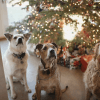 'Twas The Night Before Petmas When All Through The Pack'