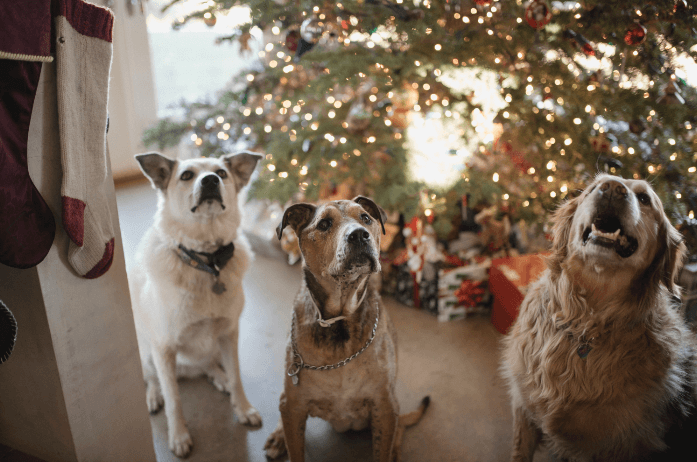 Dogs Chrsitmas