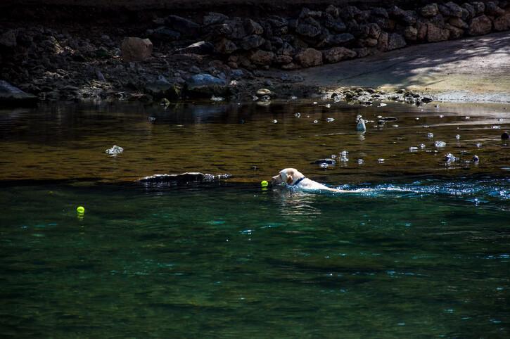dog friendly barton creek austin texas
