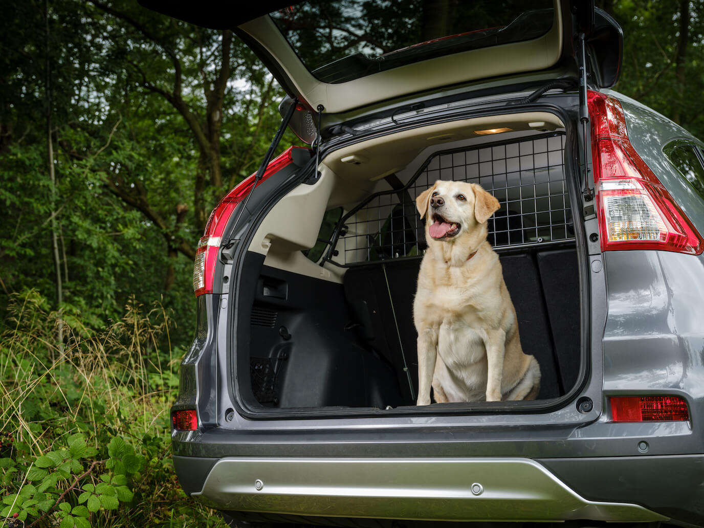dog proof your car