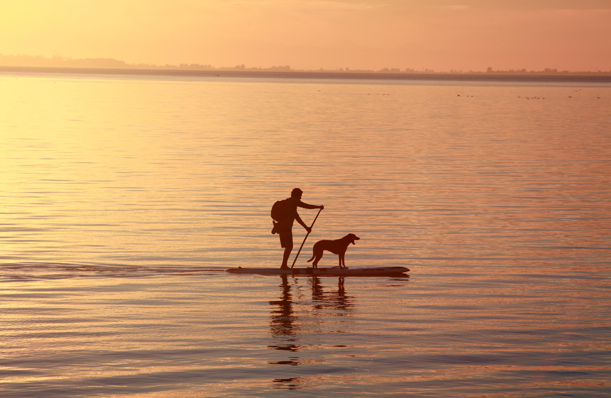 stand up paddle boarding with dogs