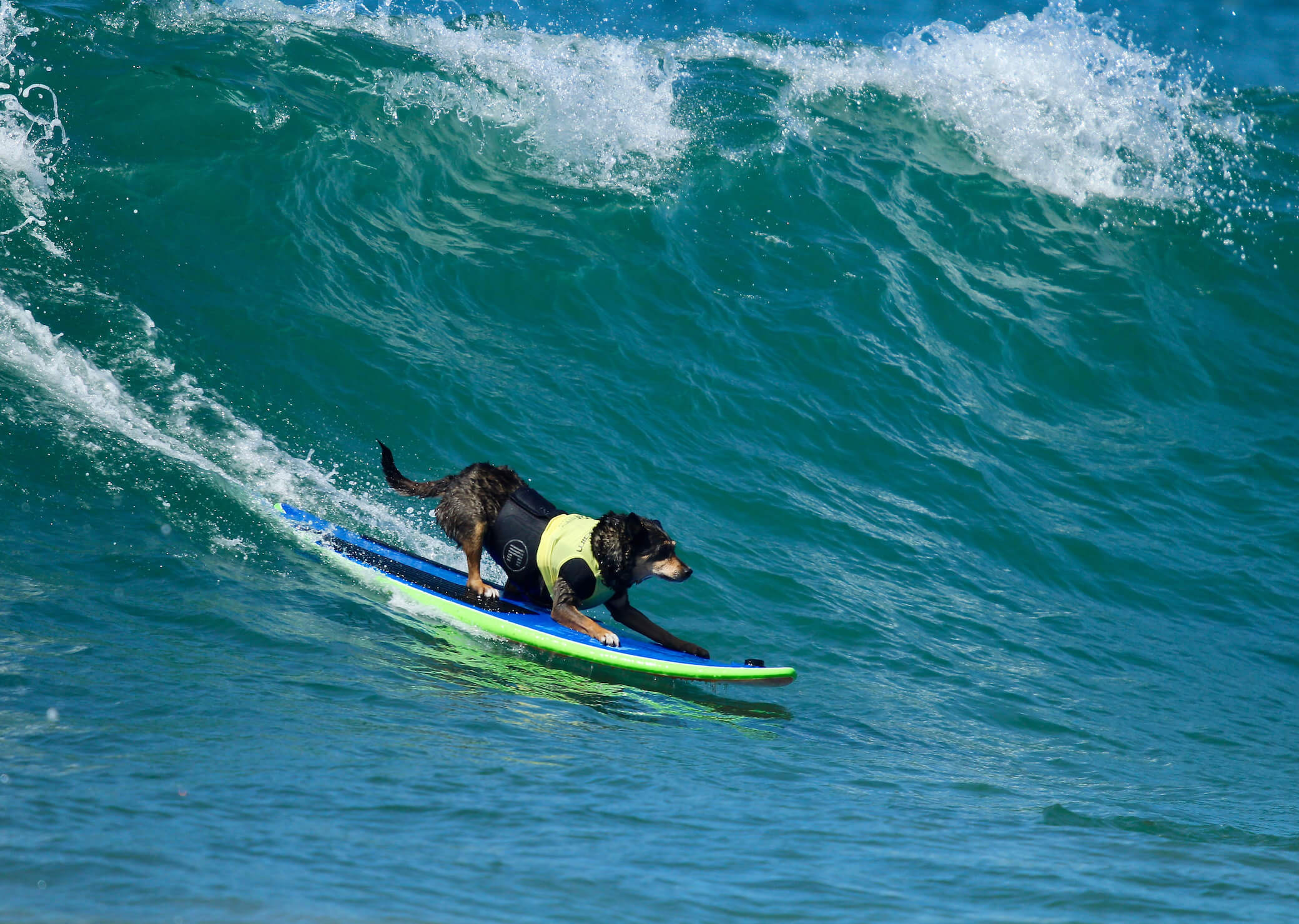 US destinations to visit with your dog