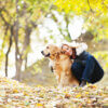 Adopting a senior pet: could a rescue dog be perfect for your family?